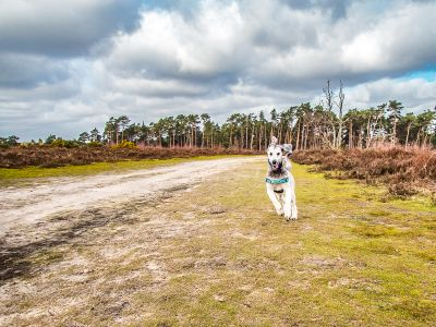 Photo Walk – Frensham Common and Little Pond, Surrey