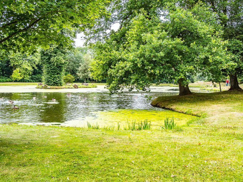 Painshill  - Surrey 4