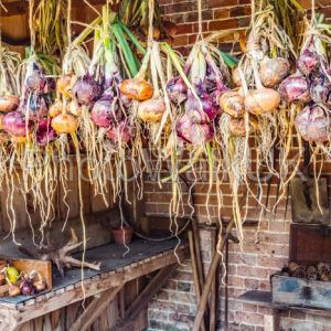Strings of onions of various colours in a garden shed and drying. - Photo Walk UK - photography inspiration