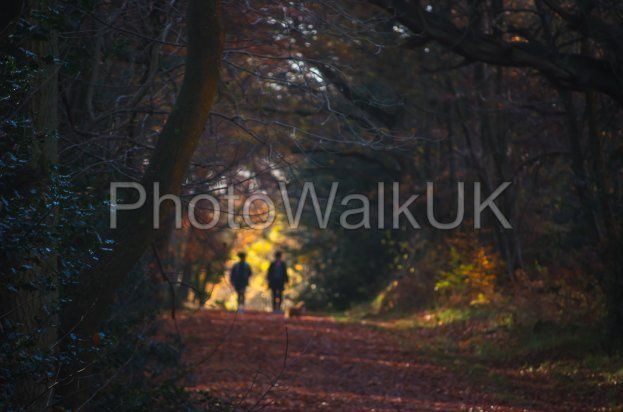 Abstract Image of two people walking through a tree-lined tunnel