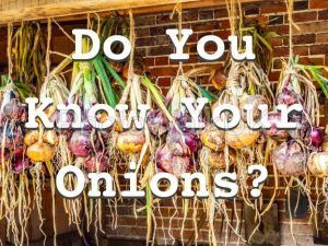 Do You Know Your Onions – Text Sign - Photo Walk UK