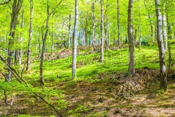 English Woodland in the Summer - Photo Walk UK