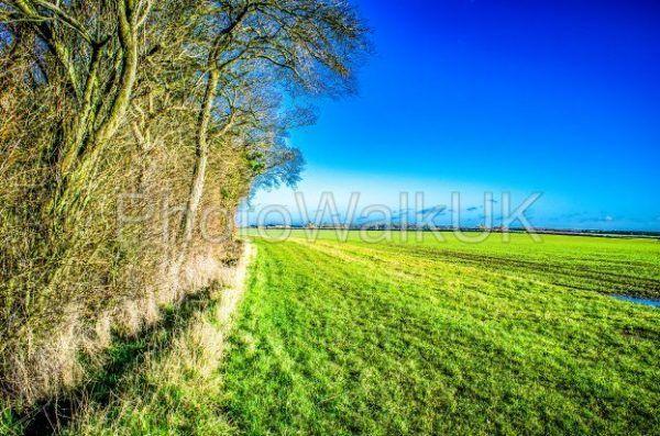 English field bordering on woodland 1