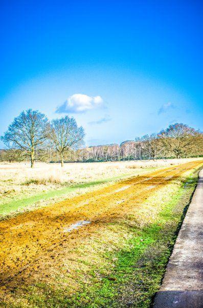 Tracks across Richmond Park 1