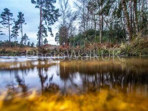 View across water and under water to forest scene - Photo Walk UK