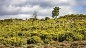 Frensham Heath in Surrey UK - Photo Walk UK