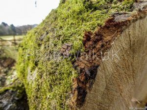 Moss covered felled tree - Photo Walk UK
