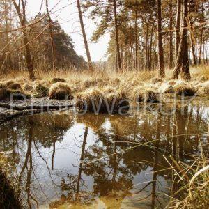 Aqua Brown Forest Pool - Photo Walk UK