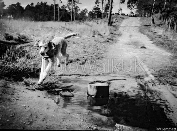 Poodle Over Stream – Black and White - Photo Walk UK