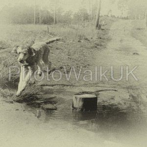 Poodle Over Stream  – Vintage - Photo Walk UK
