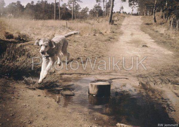 Poodle Over Stream – Vintage Film - Photo Walk UK
